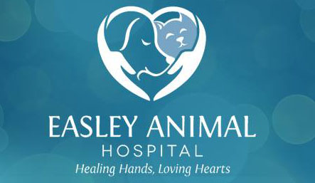 Veterinarian and Animal Hospital in Easley, SC